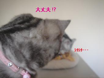 0209_04.jpg