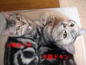 1230_01.jpg